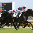 【キズナ引退】佐藤哲三→武豊からダービー・凱旋門賞と思い出たくさんの馬でした。