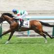 【札幌2歳S】新馬戦から占うアラバスター他有力馬分析と穴馬発表!【2015年】