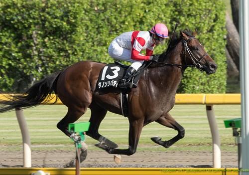 【シリウスS】枠順発表!データ分析と軸馬候補・穴馬の発表!【2015年】