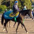 【アルゼンチン共和国杯】枠順確定!出世レースを制するのは、不振を脱却したこの5歳馬!【2015年】