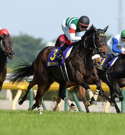 【優駿牝馬(オークス)2017】データ分析|勝ち馬候補3頭!と言っても順当なところ