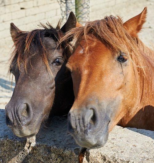 【フェブラリーステークス】サイン予想|ダークホース感満載の馬が1頭【2018年G1】