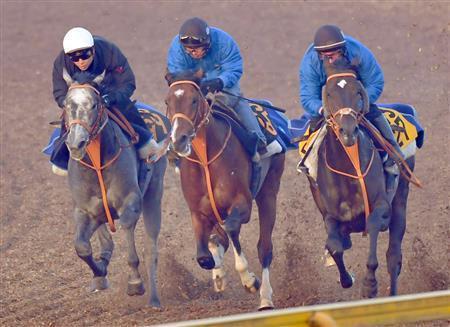 【スプリングステークス】3連単10点予想!前走追い切りで放馬したアノ馬から!【2018年】