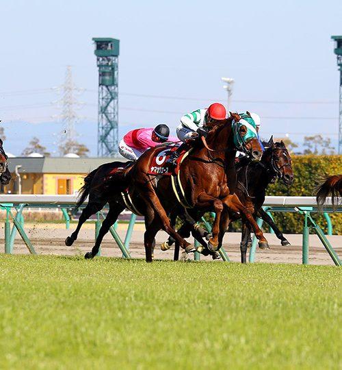 【金鯱賞】出走予定馬とデータ分析、キンショーユキヒメ?【2018年】