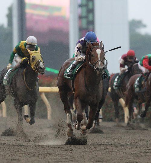 【ユニコーンステークス2018】出走予定馬とデータ分析|鳳雛ステークス1着2着馬が強い?!