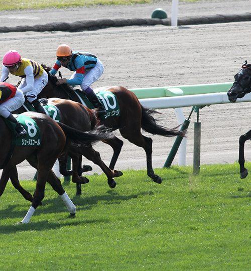 【函館スプリントステークス2018】出走予定馬とデータ分析|ジューヌエコールの連覇なるか?!