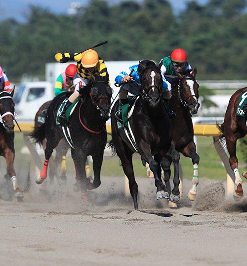 【レパードステークス2018】出走馬診断|実績上のグレートタイムは逆らえないか・・・