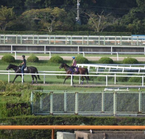 【神戸新聞杯2018】出走馬分析|ダービー馬ワグネリアンは藤岡康太に乗り替り