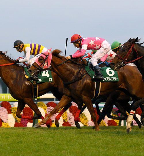 【京阪杯2018】データ分析|ざっくりと予想してみた!軸馬はワンスインナムーンの逃げに期待!
