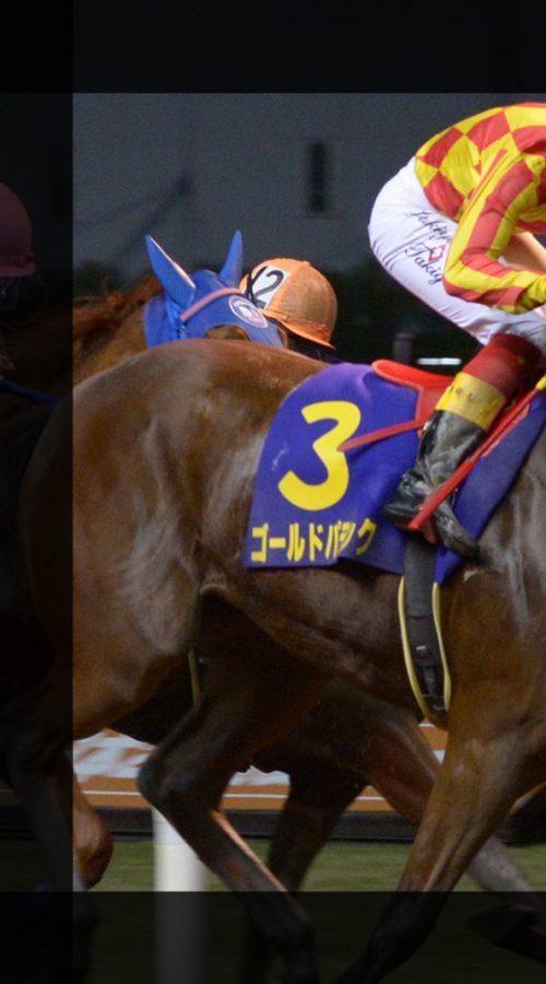 【川崎競馬】ローレル賞(東京2歳優駿牝馬トライアル)予想|ホウショウトレイルvsアークヴィグラスの一騎討ち!