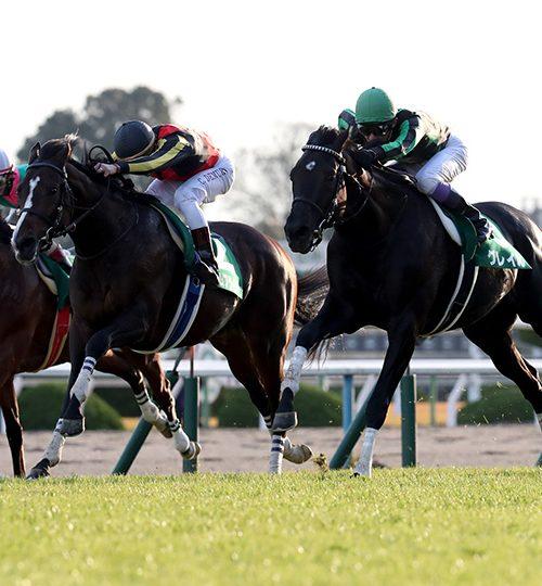 京都2歳ステークス2018最終予想|クラージュゲリエを軸馬に!穴馬にはショウリュウイクゾを指名!