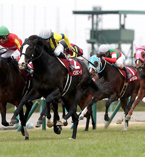 阪神カップ2018出走予定馬とデータ分析|人気上位拮抗か?