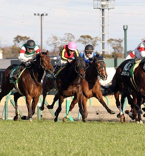 愛知杯2019出走馬分析 ルメール・デムーロを買えば勝てる簡単なレースです【2019年1月26日】