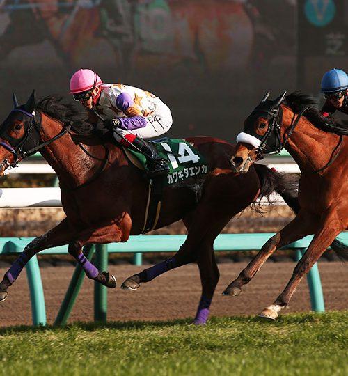 中山牝馬ステークス2019データ分析|荒れるハンデ牝馬重賞!軸馬不在、データもあいまい(汗【2019年3月9日】