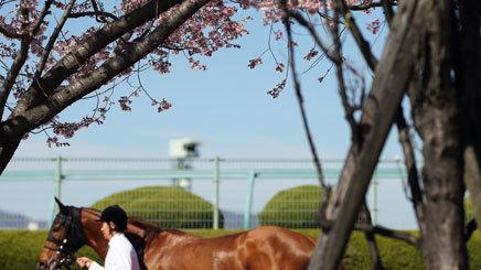【競馬コラム】今週から東京・京都開催|注目は平成最後のG1天皇賞・春【競馬次走】