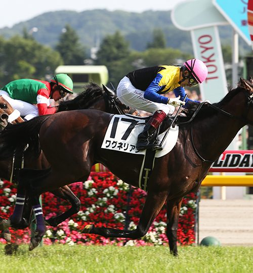東京優駿(日本ダービー)2019出走予定馬とデータ分析|逆説的にデータを見ると1頭残る!ここが穴馬か?【2019年5月26日】