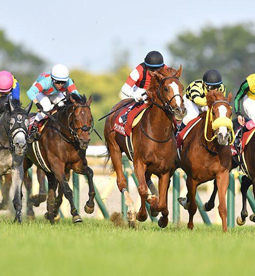 目黒記念2019出走予定馬とデータ分析|ブラストワンピース凱旋門賞への壮行レース!