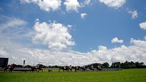 【競馬コラム】もうじき真夏到来。夏競馬を楽しむには!【競馬次走】