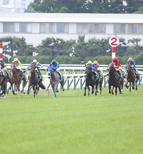 函館2歳ステークス2019枠順確定とデータ分析|4番人気以内の馬が中心も逆転の穴馬はココ!