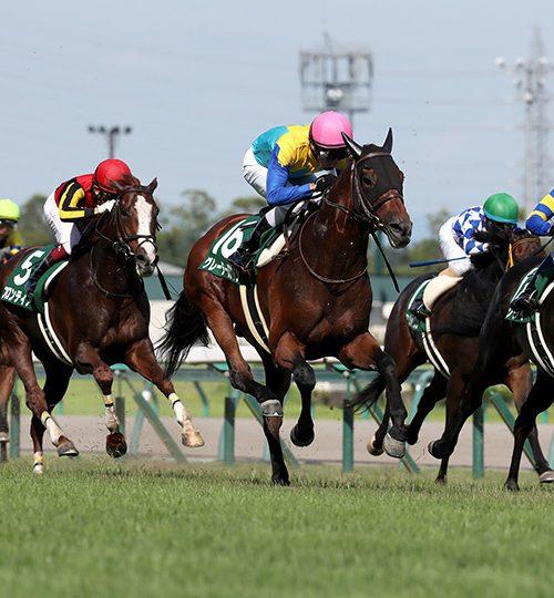 中京記念2019データ分析|データ推奨は昨年3着のアノ馬!波乱の匂いしかしない!!