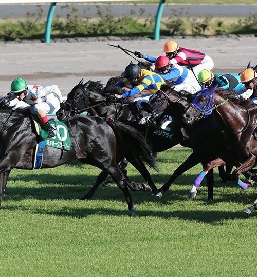 京成杯オータムハンデ2019データ分析|データ推奨馬はここ!関屋記念から巻き返しはフローレスマジック!