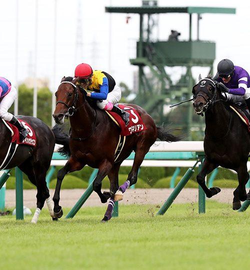 神戸新聞杯2019枠順確定とデータ分析|サートゥルナーリアvsヴェロックスで間違いなし?!