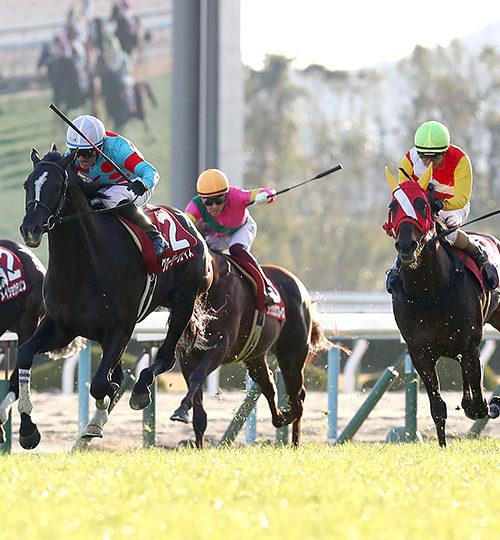 日経新春杯2020予想|3連複13点で勝負!本命レッドレオンから!