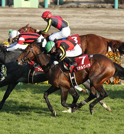 中山記念2020データ予想|データからの勝ち馬候補は一頭のみ!